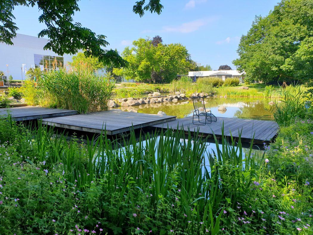 Das Bild zeigt einen kleinen Teich im Grugapark Essen