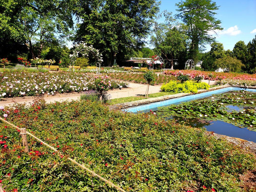 Das Bild zeigt den Rosengarten im Grugapark Essen