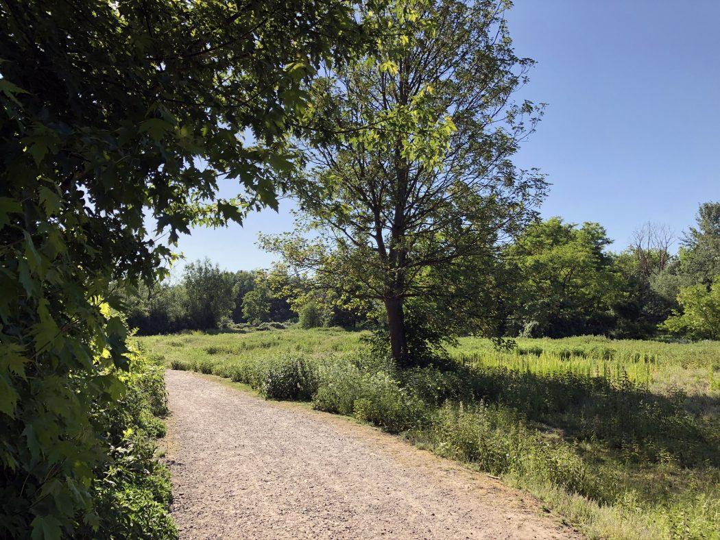 Das Bild zeigt den Wanderweg in Herne