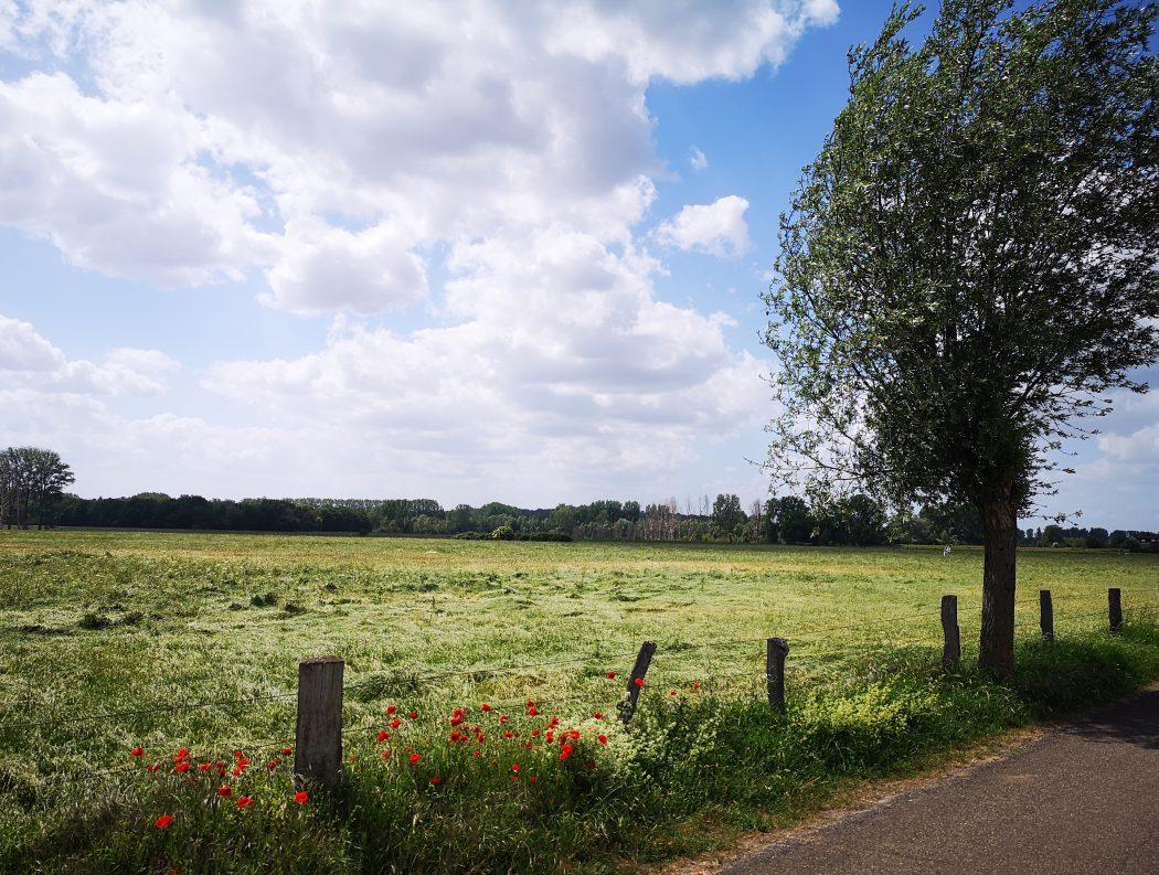Das Bild zeigt eine grüne Wiese mit Wohnblumen am Rand.