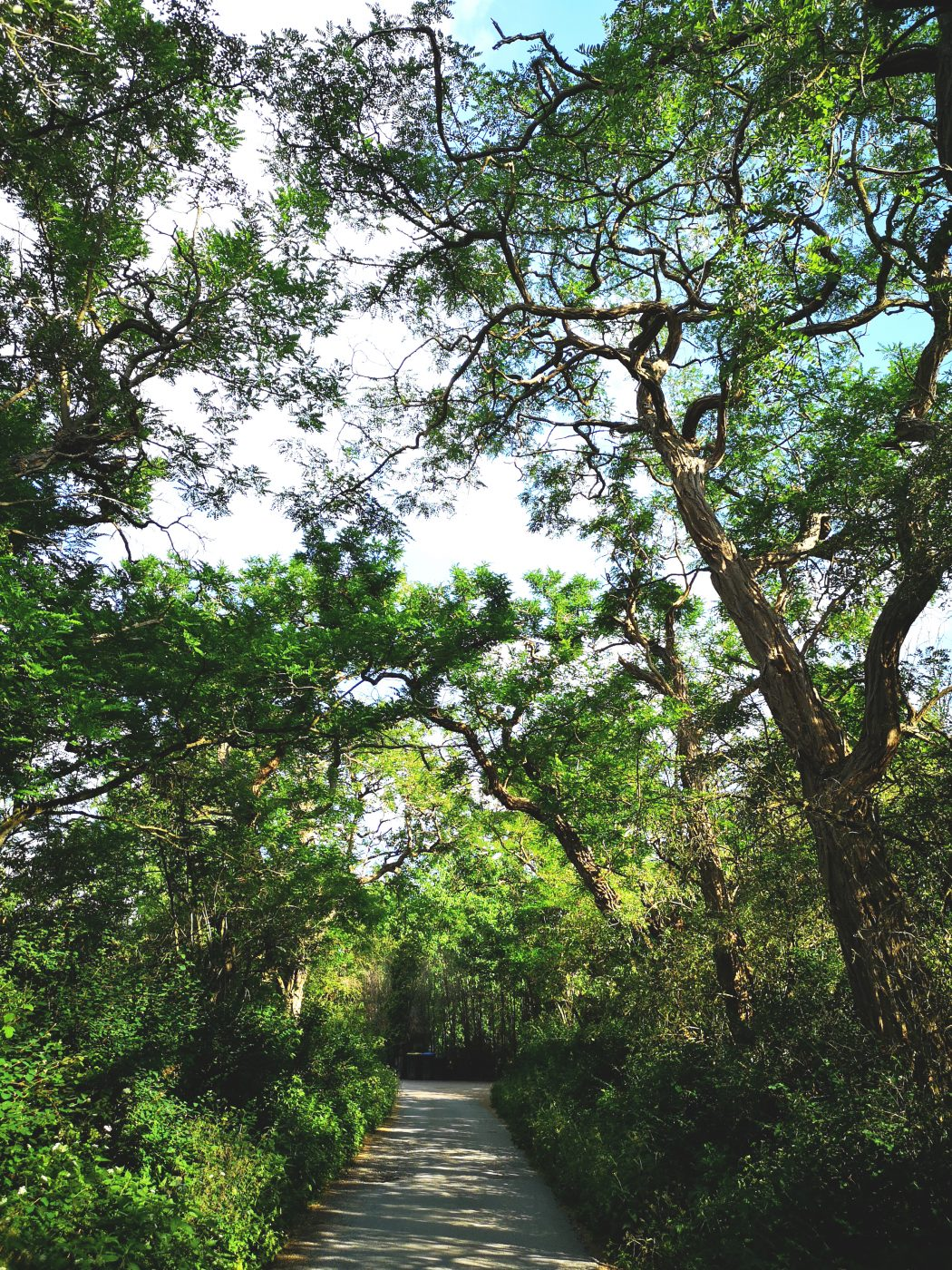 Das Bild zeigt einen Weg mit Bäumen überrankt.