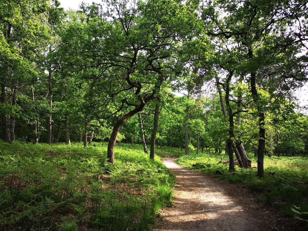 Das Bild zeigt einen Weg in einem Wald.