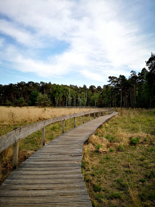 Das Bild zeigt einen Bohlenweg in einer Moorlandschaft.