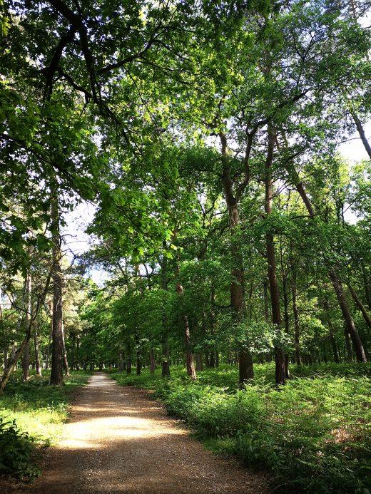 Das Bild zeigt einen Waldweg.