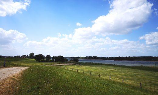Das Bild zeigt den Rhein und einen Deich.