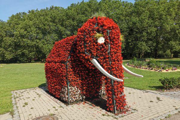 Das Foto zeigt einen Elefant aus Blumen in Hamm
