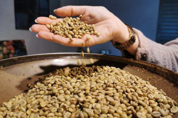 Das Foto zeigt Liberica Kaffeebohnen im Bebuna in Hamm