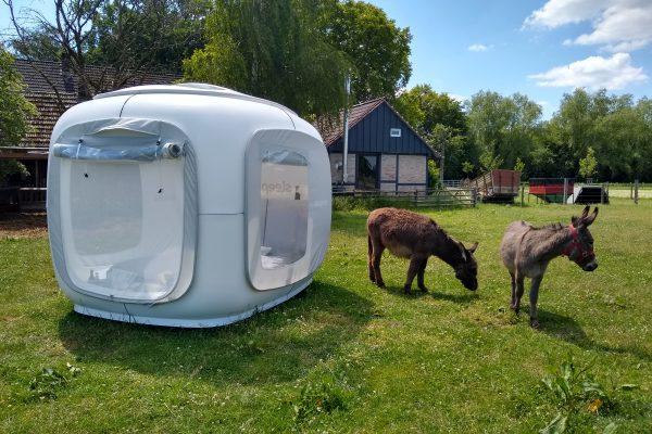 Das Foto zeigt zwei Esel neben dem Sleeperoo in Hamm
