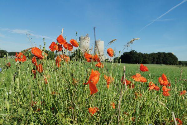 Das Foto zeigt eine Blumenwiese am Kraftwerk in Hamm