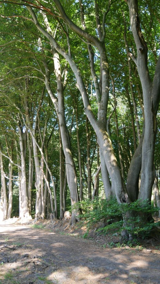 Das Bild zeigt Bäume im Naturpark Hohe Mark