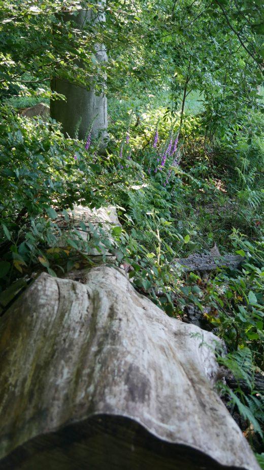 Das Bild zeigt einen Wald