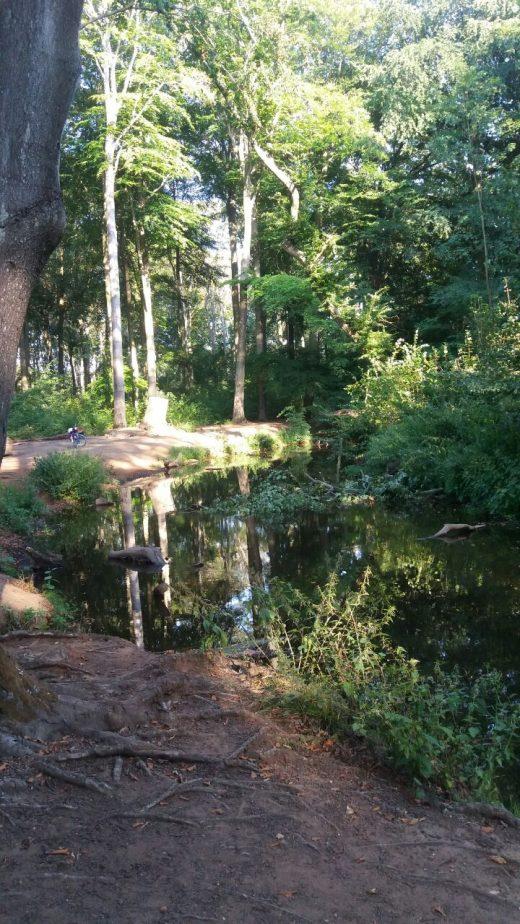 Das Foto zeigt das Rotbachtal in Dinslaken