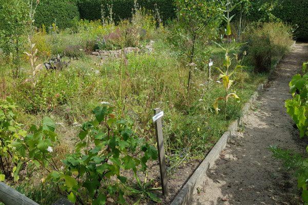 Das Foto zeigt den Bauerngarten am Hof Emschermündung in Dinslaken