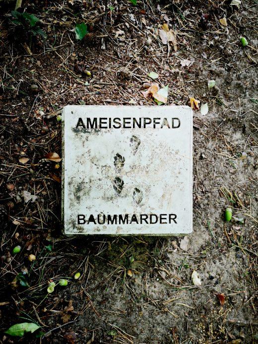 Das Bild zeigt einen Stein mit Ameisenpfad beschriftet sowie den Spuren eines Baummarders
