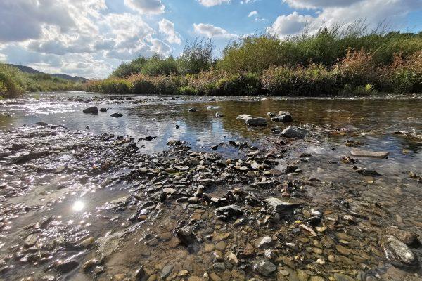 Das Foto zeigt einen Flachwasserbereich der renaturierten Ruhr in Bestwig