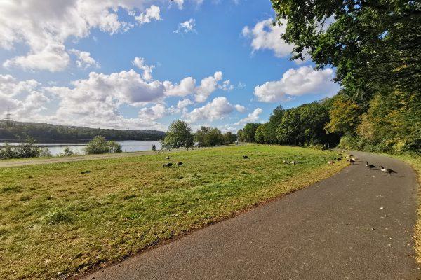 Das Foto zeigt Wildgänse am Kemnader See in Bochum
