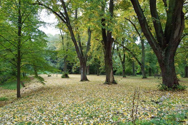 Das Foto zeigt den Schlosspark des Schloss Schwansbell in Lünen
