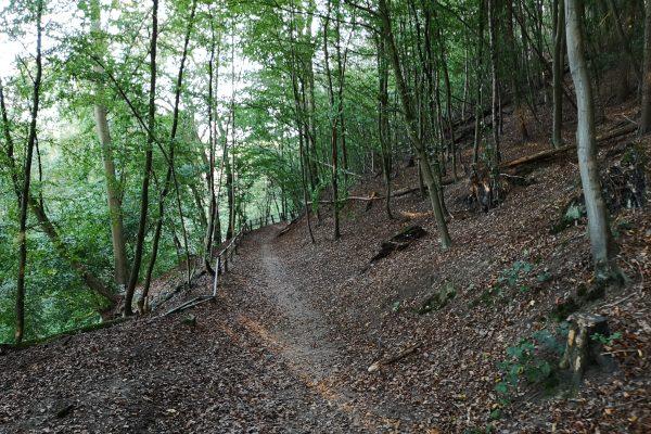 Das Foto zeigt ein Waldgebiet in Hattingen