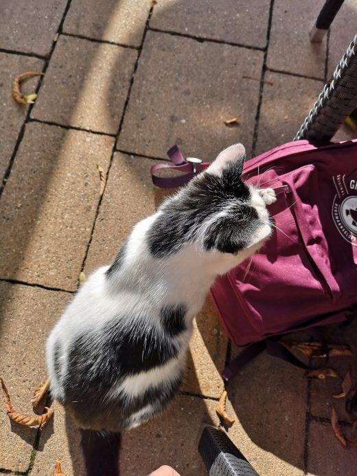 Das Foto zeigt eine Katze im Waldhaus Bochum