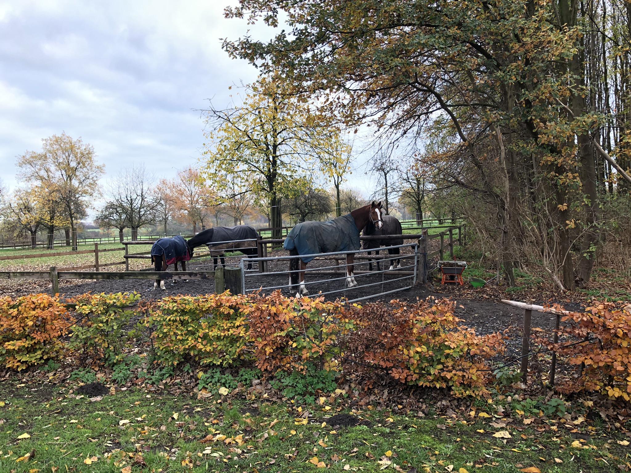Pferde auf der Koppel am Zuweg zur Brennerei Ehringhausen