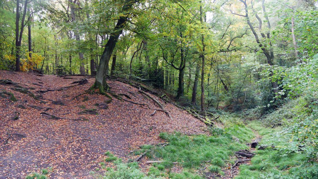 Das Foto zeigt den Duisburger Stadtwald