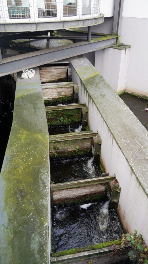 Das Foto zeigt die Fischtreppe in Mülheim an der Ruhr