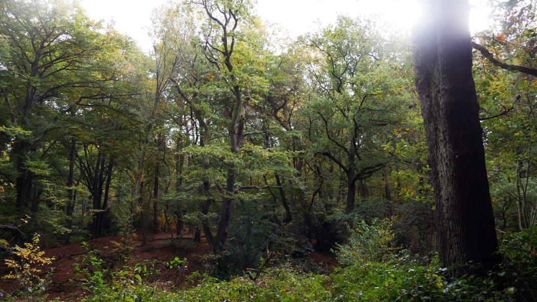 Das Foto zeigt eine Waldidylle in Duisburg