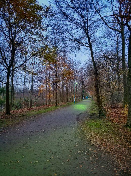 Das Bild zeigt einen mit Bäumen gesäumten Weg