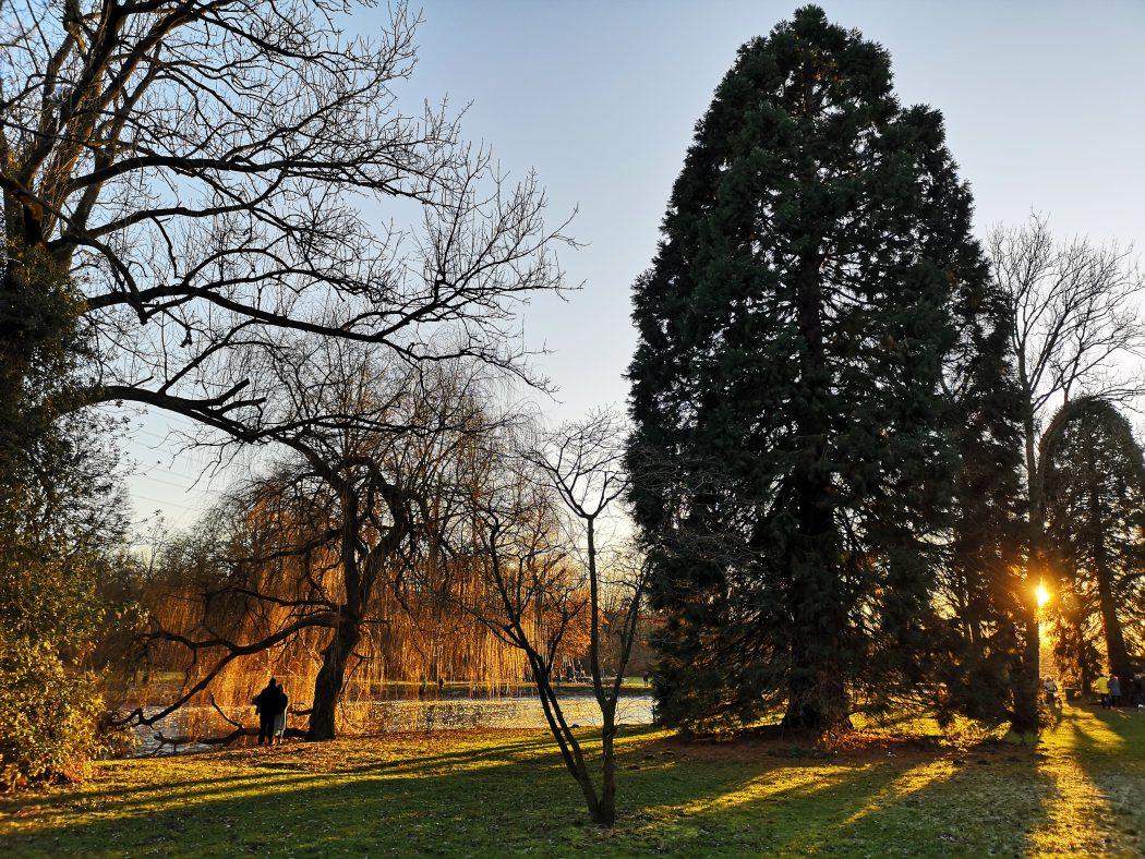 Das Bild zeigt Bäume an einem See im Sonnenuntergang