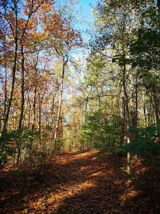 Das Bild zeigt einen Waldweg