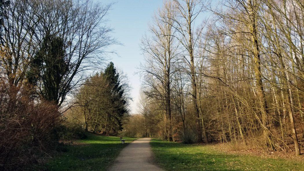 Das Bild zeigt einen Wanderweg in einem Wald