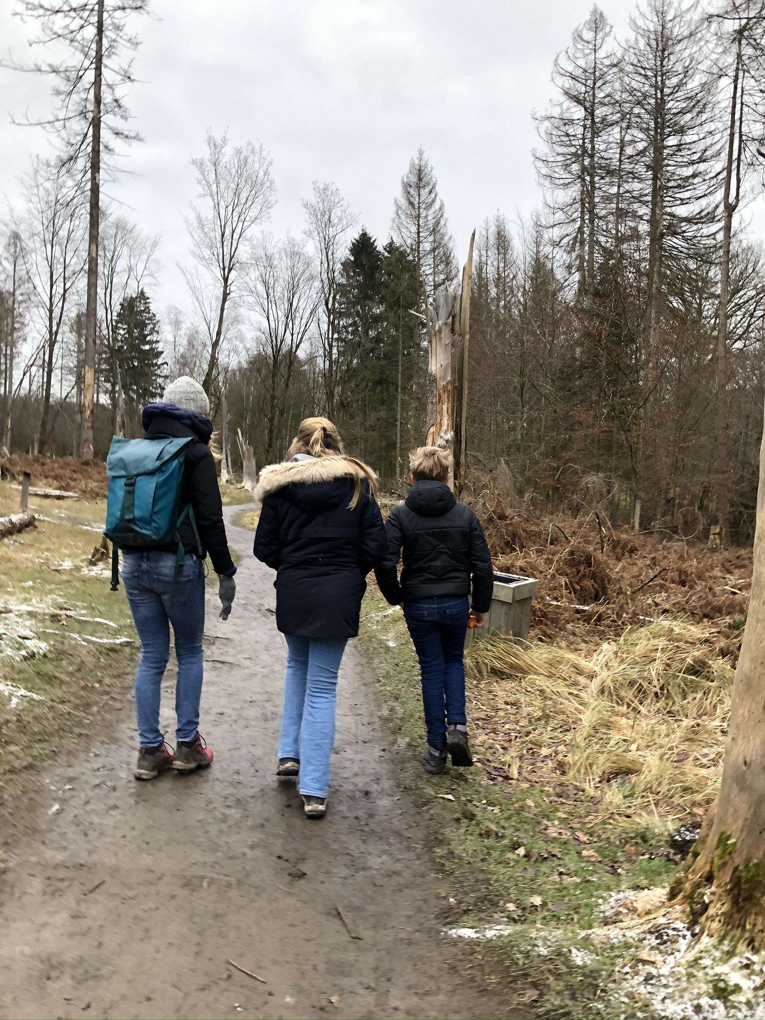 Wandern durch den unordentlichen Wald im Wildwald Vosswinkel in Arnsberg