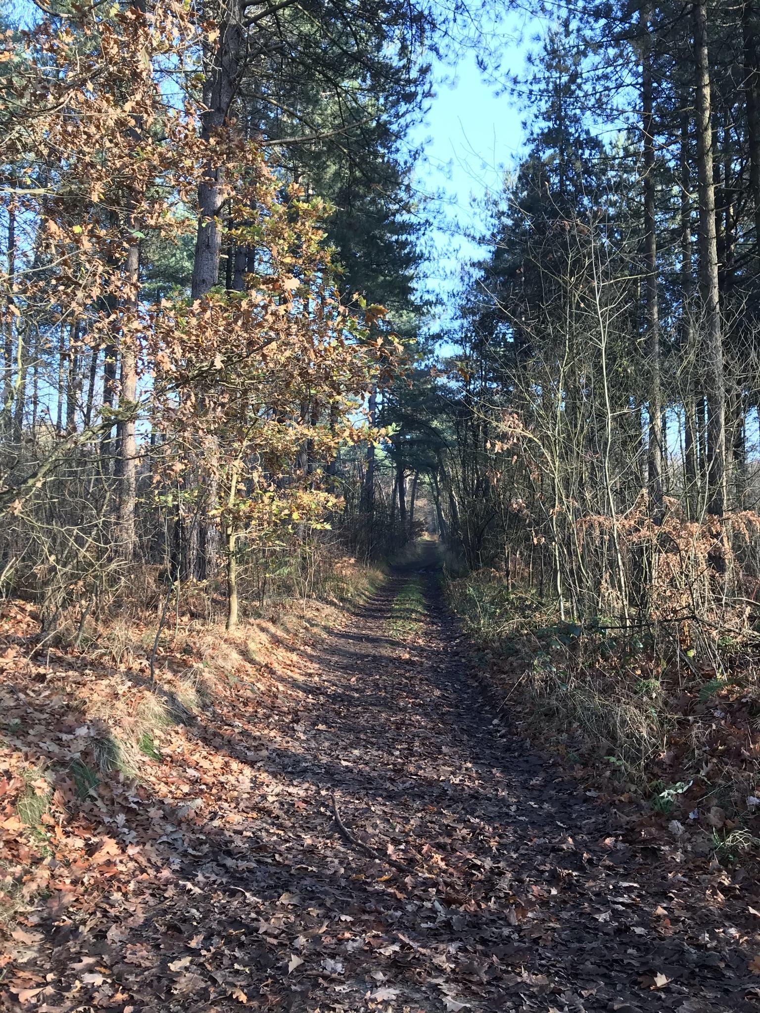 Schmaler Wanderpfad in der Haard im Naturpark Hohe Mark im Ruhrgebiet