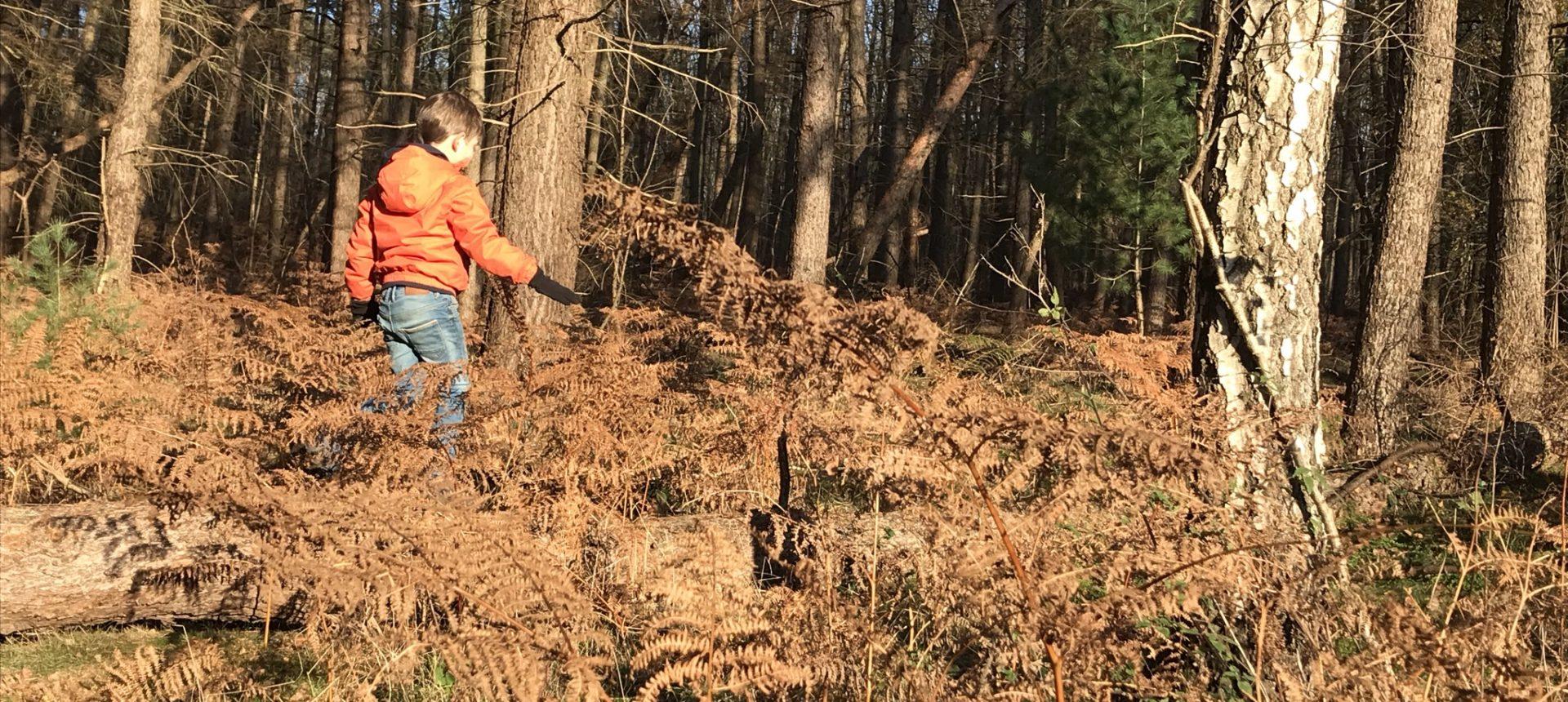 Kraxeln auf umgefallenen Bäumen in der Haard im Naturpark Hohe Mark im Ruhrgebiet