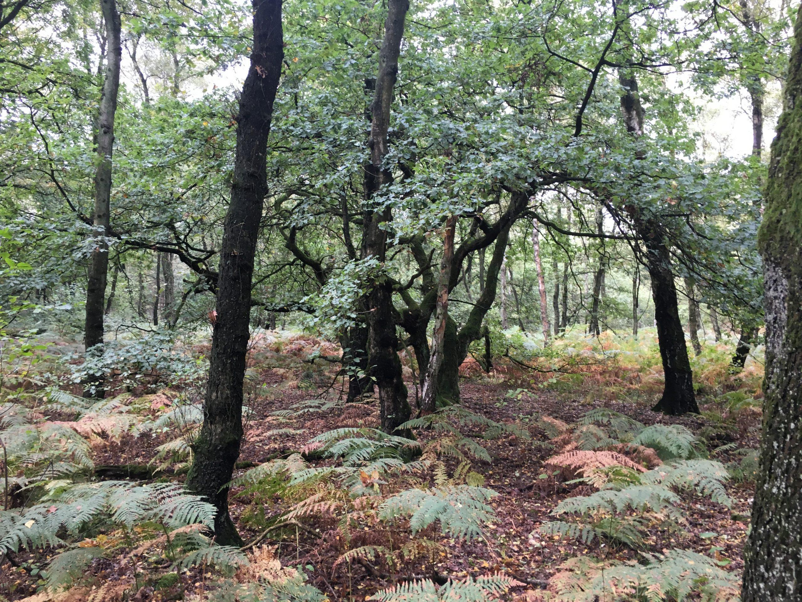 Herbstwald in der Haard im Naturpark Hohe Mark im Ruhrgebiet