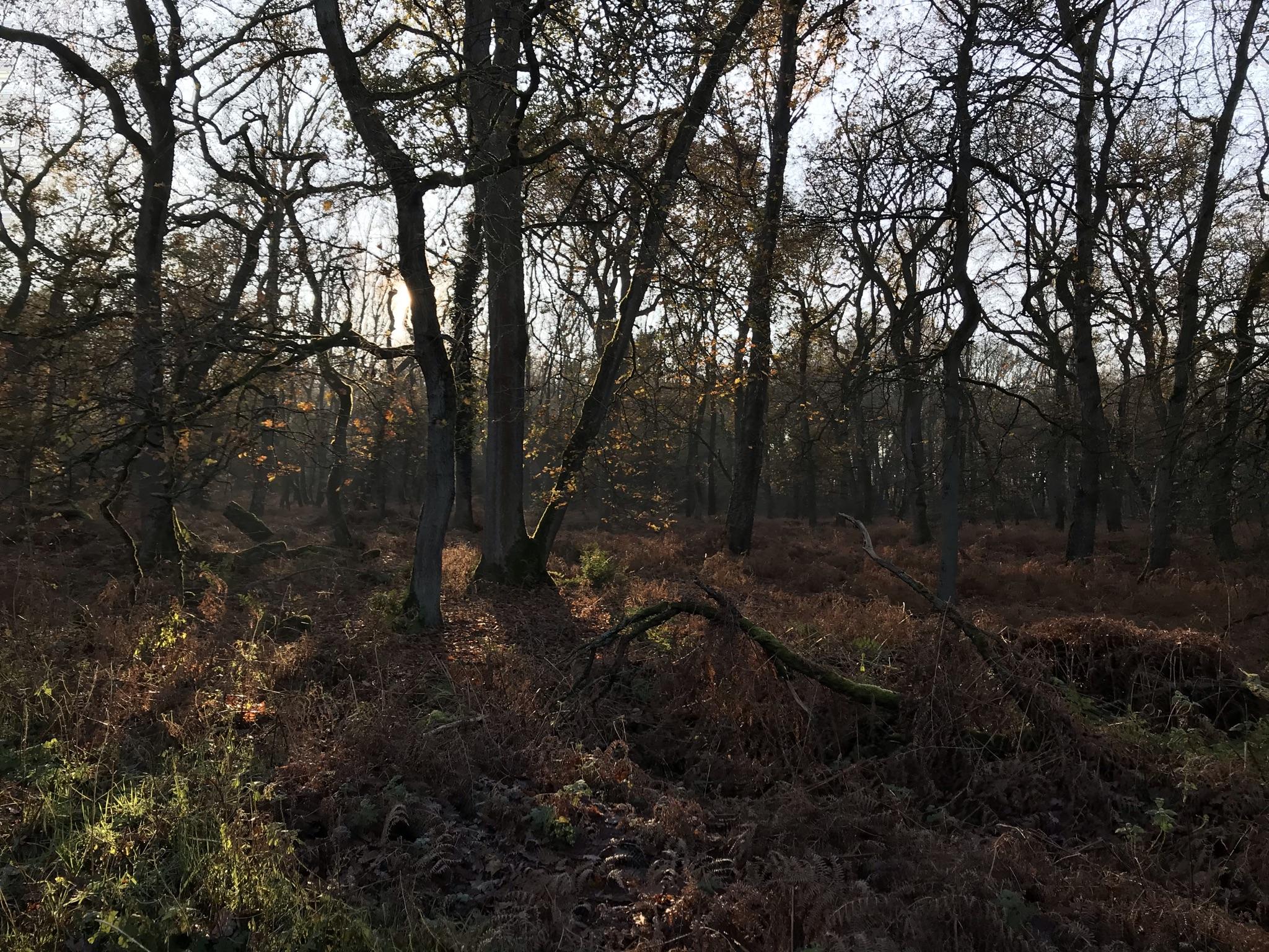 Winteratmosphäre in der Haard im Naturpark Hohe Mark im Ruhrgebiet