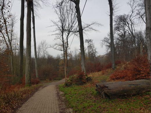 Das Bild zeigt einen Weg zwischen Bäumen