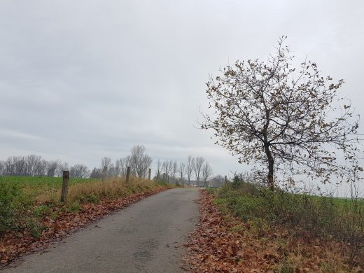 Das Bild zeigt einen Weg zwischen Wiesen