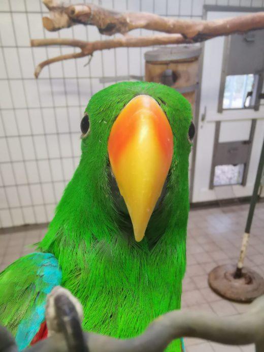 Das Foto zeigt einen Papagei in der Auffangstation des Grugapark Essen