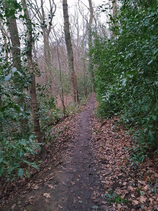 Das Foto zeigt einen Wald in Witten-Bommern