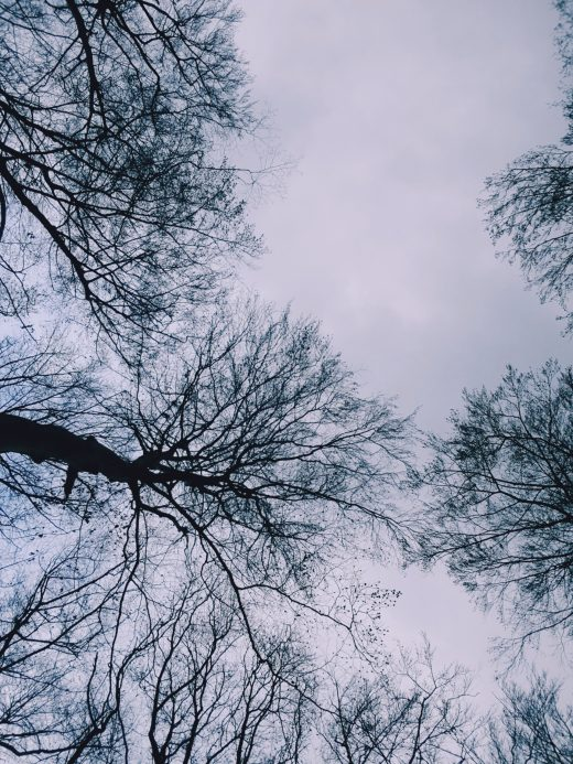 Das Foto zeigt den Süggelwald in Dortmund