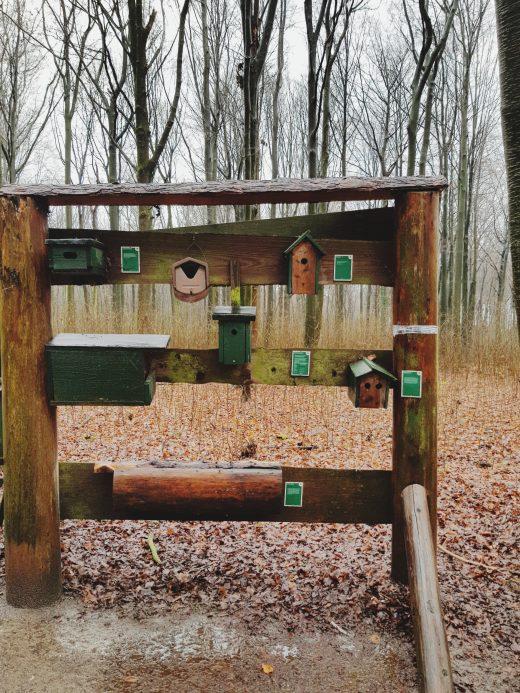 Das Foto zeigt Vogelbrutkästen einer Erlebnisstation im Süggelwald in Dortmund