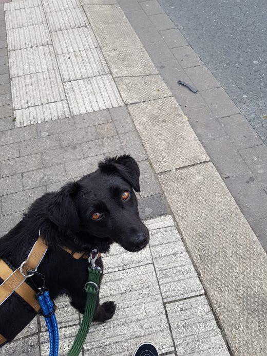 Das Foto zeigt Melissas Hund