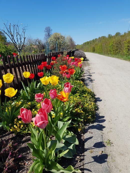 Das Foto zeigt Blumen am Rande des Emscherwegs in Dortmund