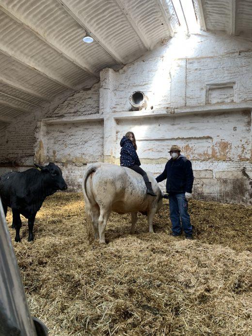 Das Foto zeigt Ninas Tochter auf einer Kuh auf dem Bauernhof Sagel in Bottrop-Kirchhellen