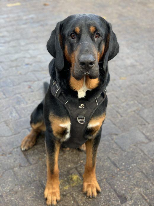 Das Foto zeigt den Hofhund Purzel des Bauernhofs Sagel in Bottrop-Kirchhellen