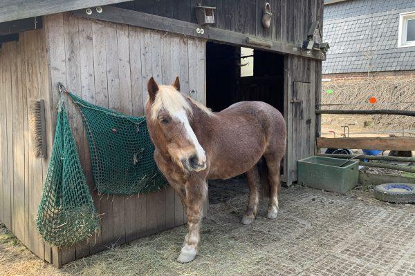 Das Foto zeigt den Pferdeopi Pierre auf dem Begegnungshof in der Espe mitten in der Elfringhauser Schweiz