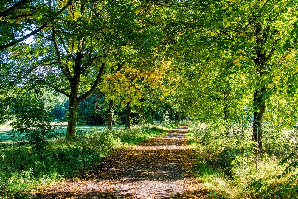 Das Foto zeigt die Natur auf dem Auberg in Mülheim an der Ruhr