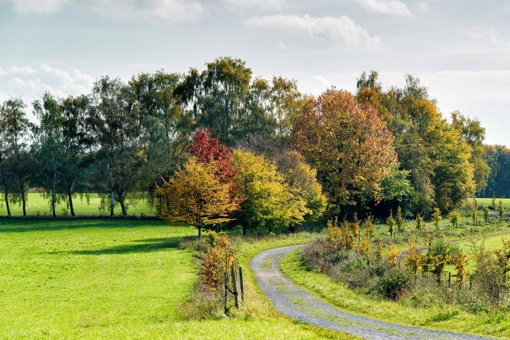 Das Foto zeigt eine weite Wiesenlandschaft auf dem Auberg in Mülheim an der Ruhr