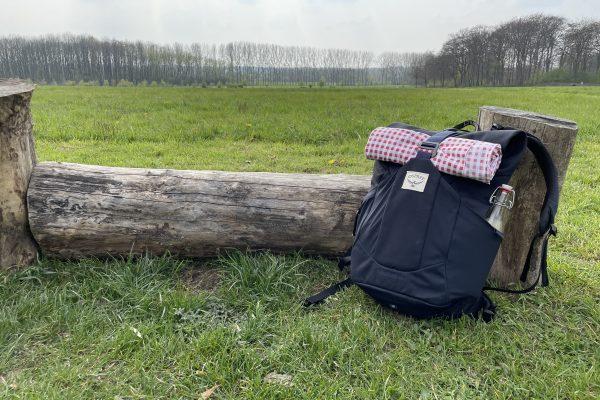 Das Foto zeigt einen Baumstamm auf derm Auberg in Mülheim an der Ruhr, der sich perfekt für ein Picknick im Ruhrgebiet eignet